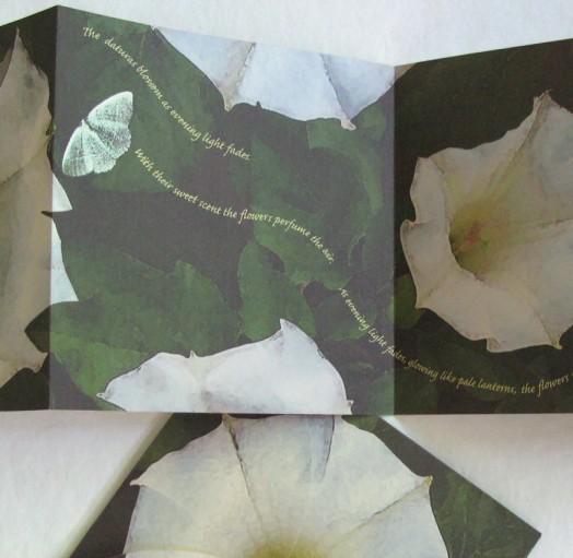 Datura (detail)